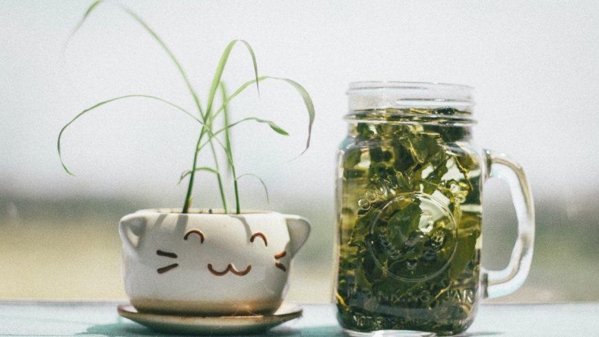 DER Tee für Vitalität, Wohlbefinden und Leistungsfähigkeit